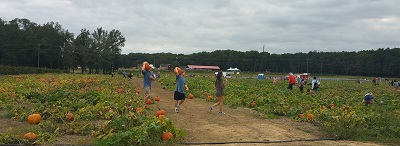 Washington Farms -pumpkin patch
