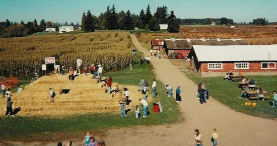 Bi-Zi Farm corn maze and pumpkin patch with hayrides
